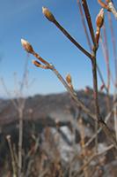 立岩山頂☆春の用意