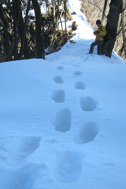 立岩北斜面☆積雪最深部