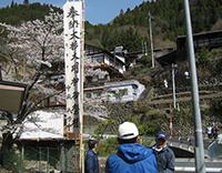 桜の大杉さん