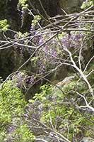 南牧村☆蝉の渓谷