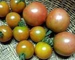 南牧産☆トマト