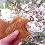 桜と鯛焼き